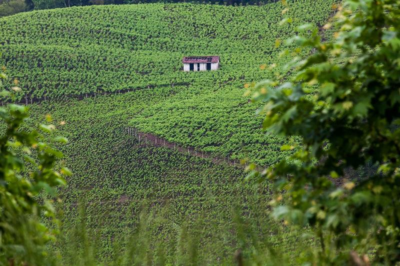 casamento no vale dos vinhedos_03